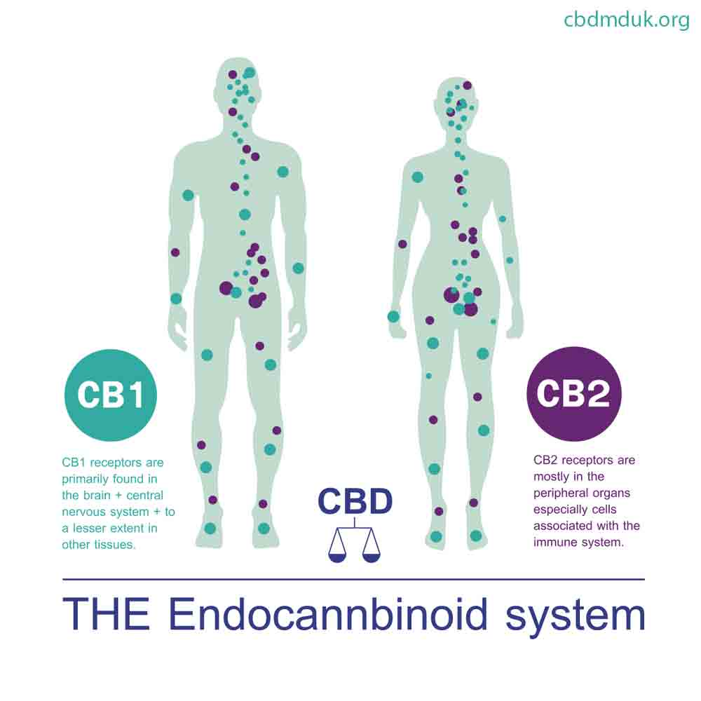 How Long Does CBD Stay in Your System