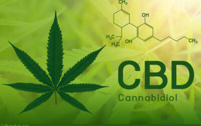 How Long Does CBD Stay in Your System to Work in The Body for A Healthy Life