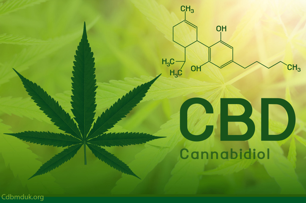 how long does CBD stay in your system to work in the body