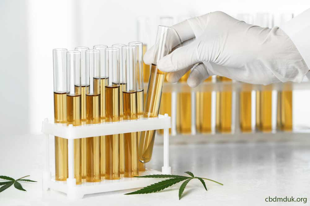 how long is cbd detectable in urine