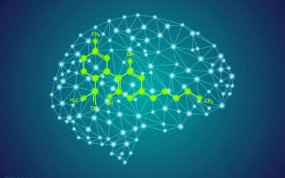 How Long Does CBD Affect the Brain?