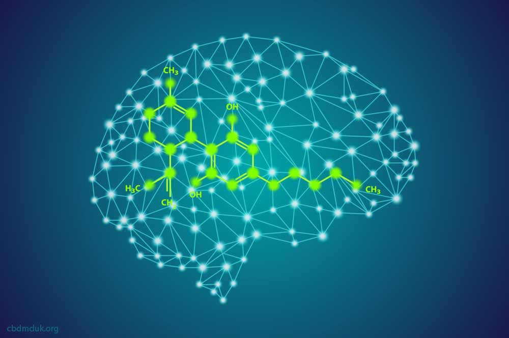 How Long Does CBD Affect the Brain