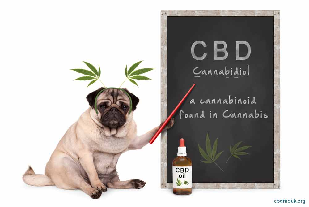 How Much CBD to Take For Autoimmune Disease  in dogs